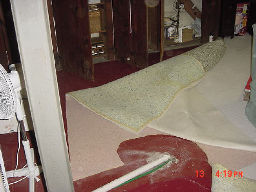 mold from wet carpet and padding